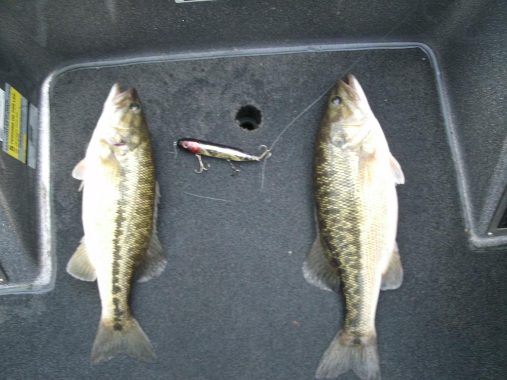 Logan martin lake fishing alabama reed 39 s guide service for Logan martin lake fishing report