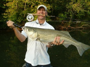 Striper on a fly