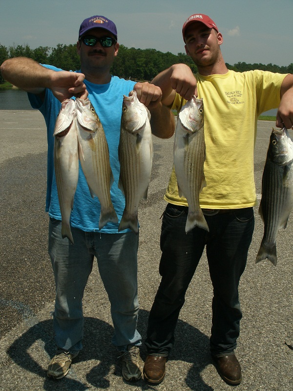 Stripes and Bass