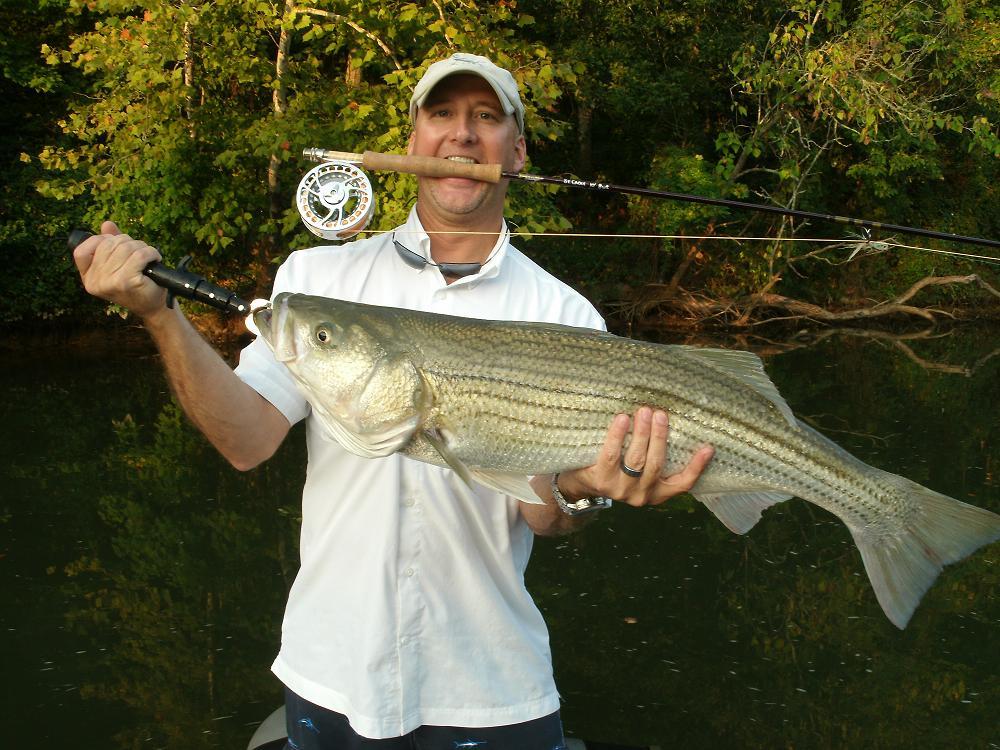 Stunning..x fly fish striped bass