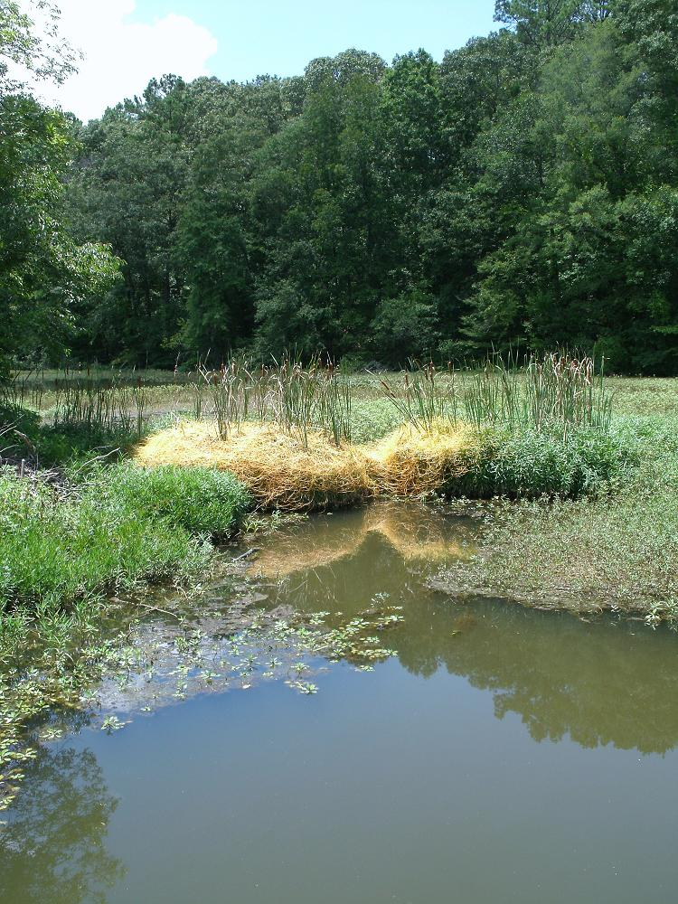 Largemouth bass fishing around shallow aquatic weeds for Lay lake fishing report